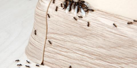 3 Pest Control Tips For Keeping Insects Out Of Your Home 4 Tennessee