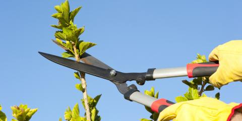 Should You Opt for Tree Pruning or Removal?, Hawthorne, Florida