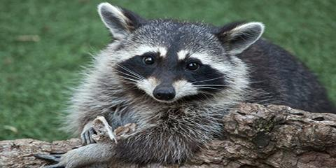 What Happens to Wildlife After Animal Removal?, New Milford, Connecticut