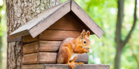 3 Animal Control Methods to Keep Squirrels From Your Home, New Milford, Connecticut