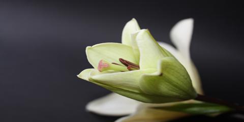 Quick Guide to Funeral Flower Arrangements, Hamden, Connecticut