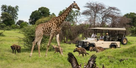 The Best African Safari Camp on Sale!  , Manhattan, New York