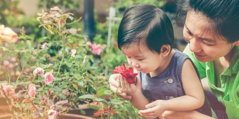 How Is Child Custody Determined?, Honolulu, Hawaii