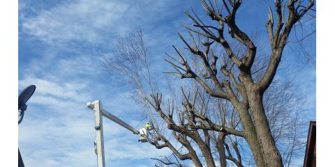 Allan Tree Services Helps Determine When You Need a Tree Removal Service, Wood River, Illinois