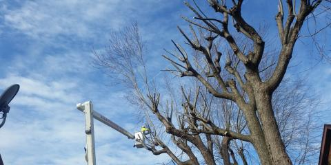 St. Louis' Tree Trimming Experts Explain Why Your Tree Lacks the Topmost Leaves, Wood River, Illinois
