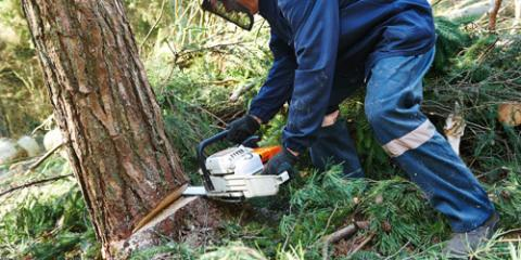 Southwestern Ohio Tree Service Gives 4 Reasons For Stump Removal, Loveland, Ohio