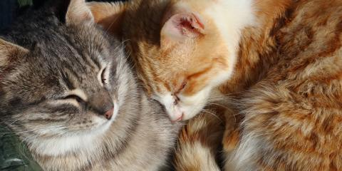 3 Tips for Introducing a New Cat to Your Home, Amsterdam, Virginia