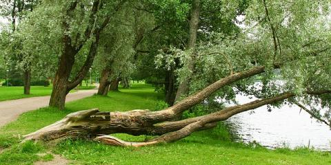 Is a Tree About to Die or Fall? 5 Signs Tree Removal Is Needed, Danbury, Connecticut