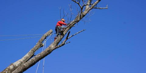 Dave & Aaron Stang's Certified Tree Care, Tree Removal, Services, Cincinnati, Ohio