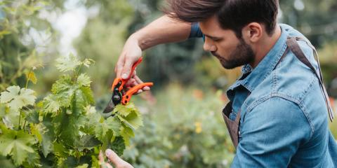What's the Difference Between Thinning & Pruning?, Centerville, Ohio