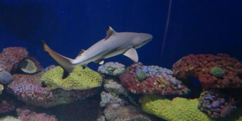 FAQs About Caring for Shark Eggs in an Aquarium, Moraine, Ohio