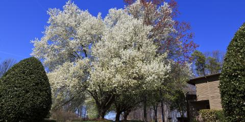 A Guide to Bradford Pear Trees, ,