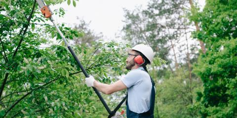 A Brief Guide to Pruning Your Trees & Shrubs, Moraine, Ohio