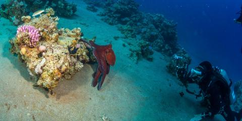 5 Animals You Can Only See on a Scuba Diving Trip, Kettering, Ohio