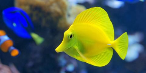 The Differences Between Freshwater & Saltwater Fish Tanks, Moraine, Ohio