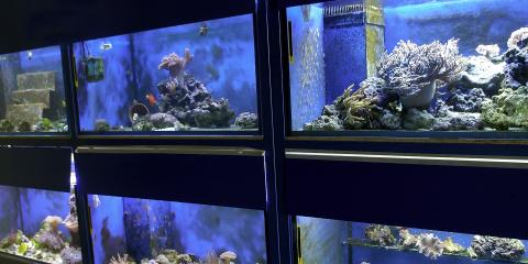 What to Know Before Starting a Saltwater Aquarium, Moraine, Ohio