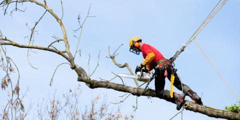 Should I Hire a Professional for Dead Tree Removal Services?, St. Charles, Missouri