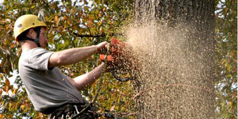 4 Signs You Have Dead Trees That Require Tree Removal, Austin, Texas
