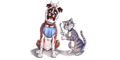 15% Off Your Pet's Dental Services & A Free Nail Trim!, Gulf Shores, Alabama