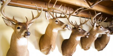 How Do You Clean Deer Mounts?, Loveland, Ohio