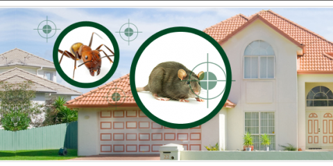 how to keep mice away from house