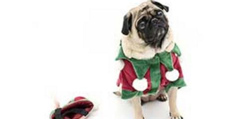 Holiday Safety for Your Pets, New Braunfels, Texas