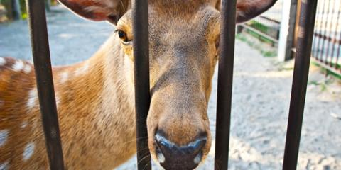 3 Tips for the Most Effective Deer Fencing, Clinton, Washington