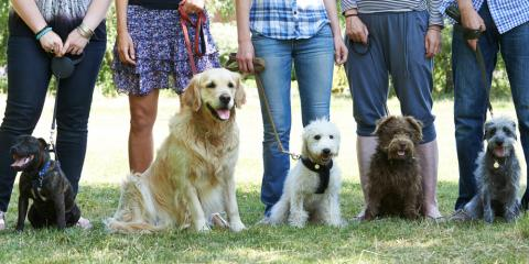 3 Reasons to Take Your Dog to Obedience Training, Defiance, Missouri