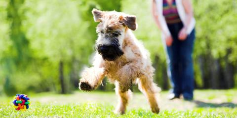 Obedience Training: 3 Outstanding Benefits, Defiance, Missouri
