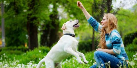 5 Dog Training Tips for Breaking Bad Habits, Defiance, Missouri