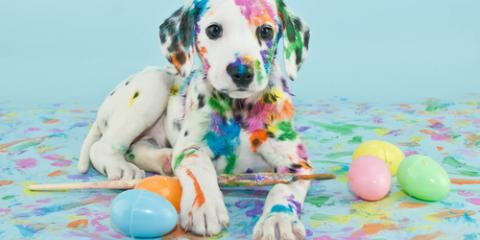 3 Pet Safety Tips for the Easter Holiday From a Local Animal Hospital, Wisconsin Dells, Wisconsin