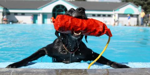 How to Stop Your Dog From Getting Dehydrated This Summer, Wisconsin Dells, Wisconsin