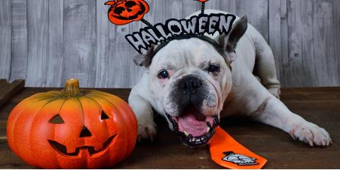 The Top Do's & Don'ts of Pet Halloween Costumes, Wisconsin Dells, Wisconsin
