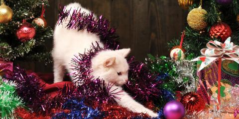 How to Cat-Proof Your Christmas Tree, Wisconsin Dells, Wisconsin