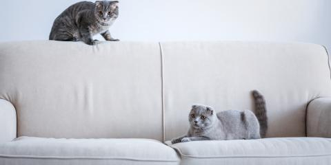 5 Pet Care Tips to Prevent Your Cat From Scratching Furniture, Wisconsin Dells, Wisconsin