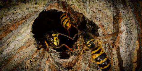 3 Important Questions You Should Ask Your Residential Pest Control Company About Wasp Removal, Russellville, Arkansas