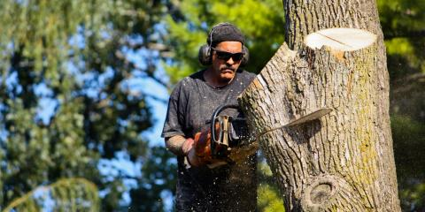 5 Signs It's Time for Tree Removal , De Motte, Indiana