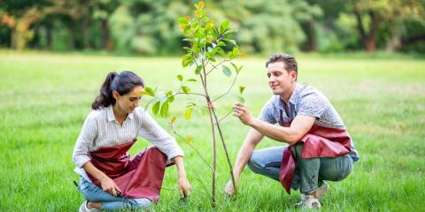 A Guide to Planting Trees in Indiana, De Motte, Indiana