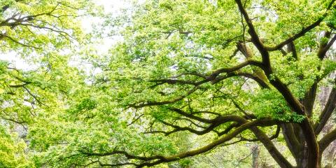 4 Tips to Care for Trees in Summer, De Motte, Indiana