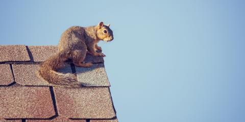 Animals That Pose a Risk to Your Roof, Northeast Jefferson, Colorado