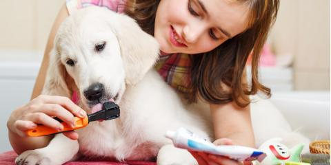 Why Your Pet Should Get a Dental Cleaning, Denver, Colorado
