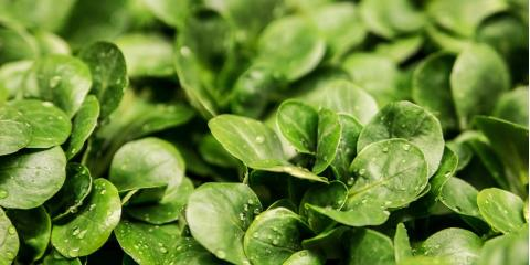 How to Find the Best Nutrients for Your Hydroponic Garden, Denver, Colorado