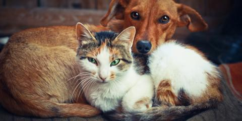 3 Ways Pets Affect Indoor Air Quality, Russellville, Arkansas