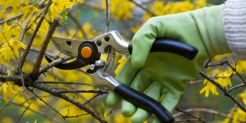 Should You Use Hand Pruners or Loppers?, ,