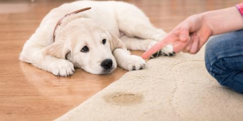 Why Your Dog May Be Using the Bathroom Indoors, Rosenberg-Richmond, Texas