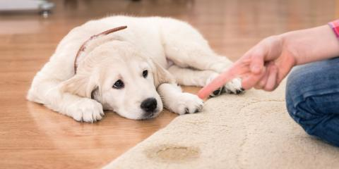 Why Pet Stain Removal Is Hard & How Professionals Can Help, Honolulu, Hawaii