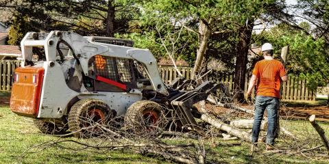 What Happens During Tree Removal?, North Royalton, Ohio