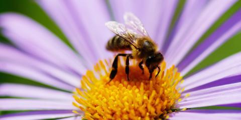 5 Ways to Help Bees in your Garden, Bethel, Ohio