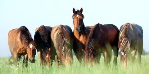 Horse Feed Experts Explain What Your Horse Needs for Proper Nutrition, Bethel, Ohio