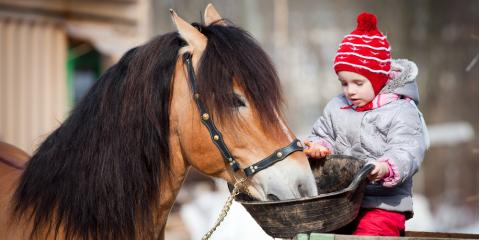 Horse Feed Supplier Shares 5 Myths About Equine Nutrition, Bethel, Ohio